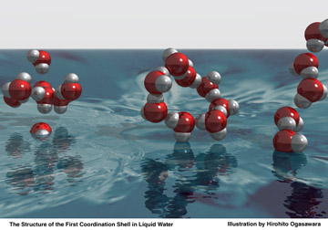 Fig. 1. In ice, each water molecule is surrounded by four other molecules in a tetrahedral arrangement (left). This new result on liquid water shows that the molecules are connected only with two others. This implies that most molecules are arranged in st