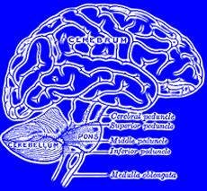 A 3-D Link between Antibiotic Resistance and Brain Disease