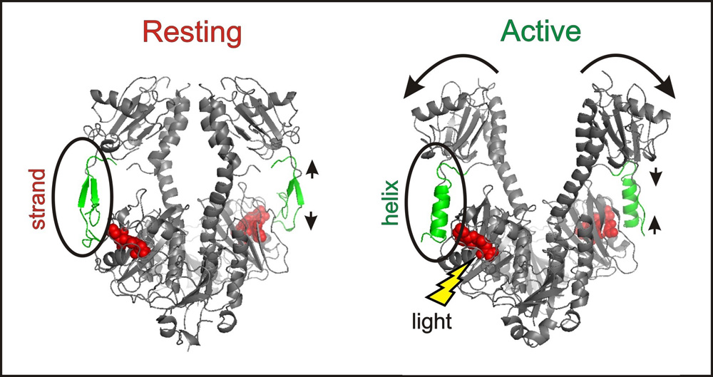 Lights, Conformational Change… Action!