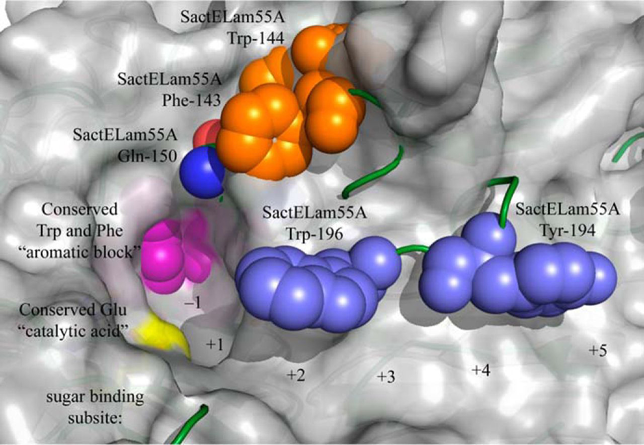 The Most Complete Functional Map of an Entire Enzyme Family