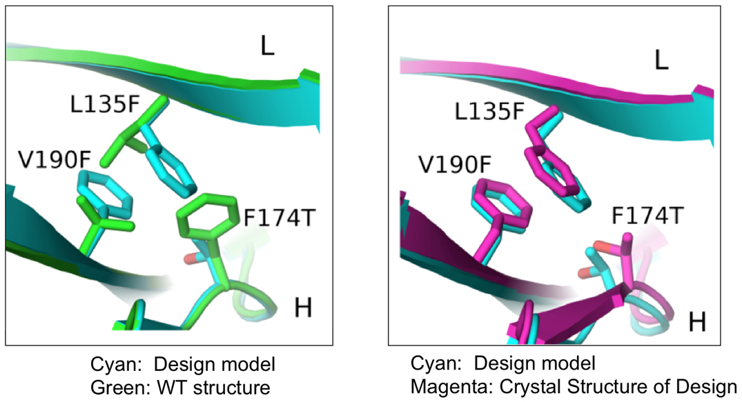 Generating More Efficient and Stable Bispecific Antibodies