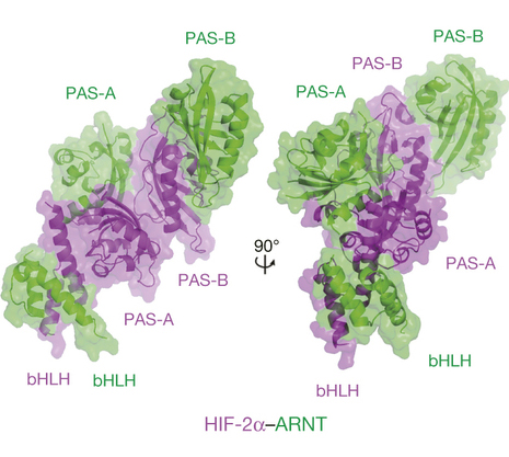 The Structure of a Protein Important for Tumor Growth
