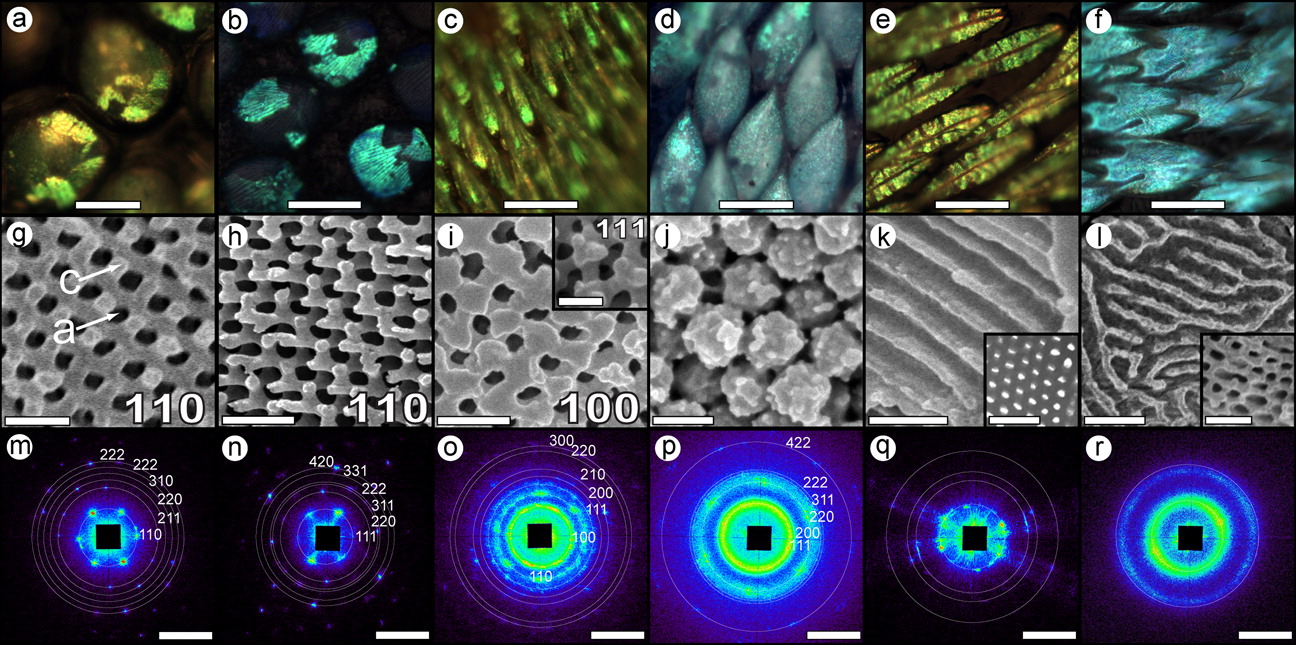Bug Colors from Self-Assembled Nanostructures