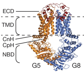 Determining the 3-D Atomic Structure of a Cholesterol Transporter