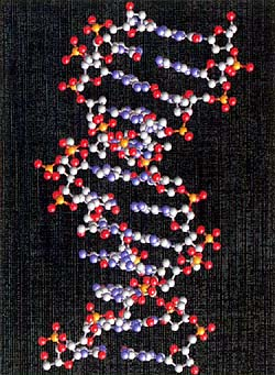 Major Advance Made on DNA Structure