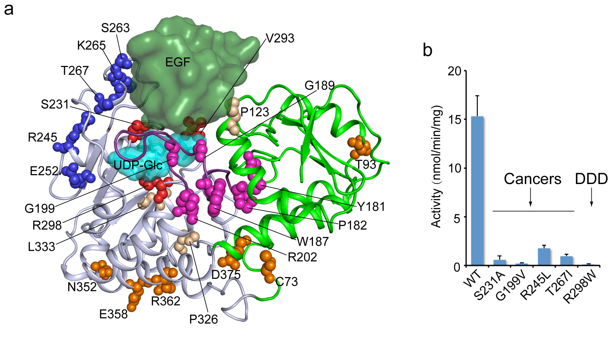 The Structure of an Enzyme Linked to a Key Cell-Signaling Protein