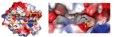 Structure of an Enzyme Inhibitor Could Be an Anticancer Drug Discovery
