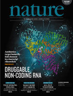 Non-coding RNA: Antibiotic Tricks a Switch