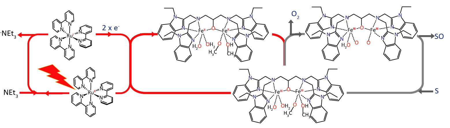 Converting Methane Gas to Liquid Methanol the Bacteria Way