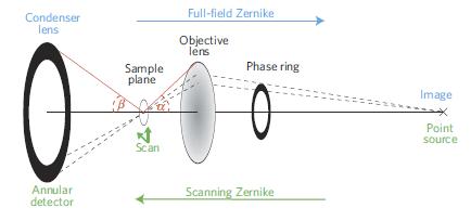 Zernike phase contrast in scanning microscopy