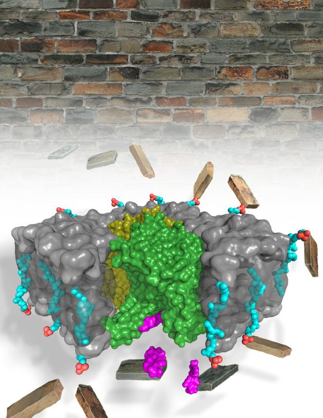 Outsmarting Antibiotic-Resistant Bacteria